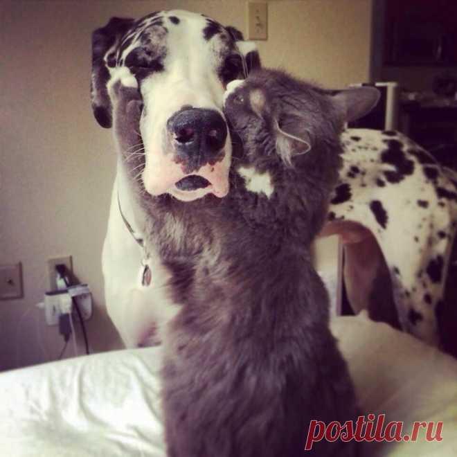 Мой любимый собакен..