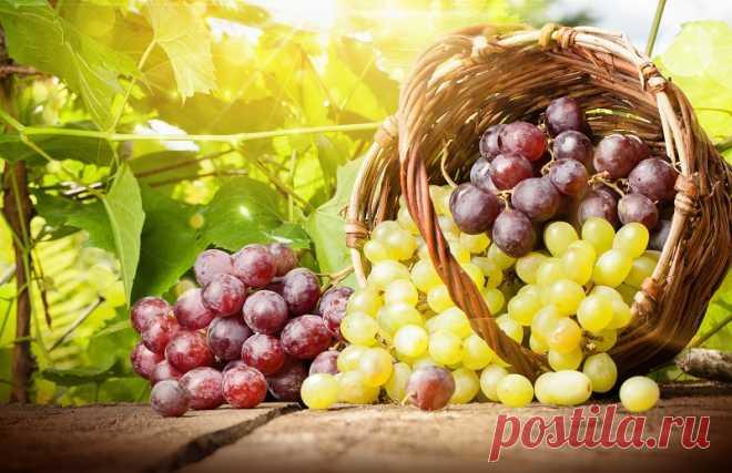 Подборка салатов с виноградом