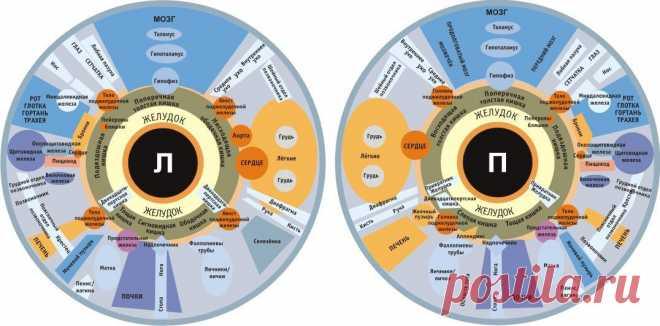 ДИАГНОСТИКА ПО ГЛАЗАМ...  Желтоватые склеры (белки) глаз «сигналят» о проблемах с печенью. Если это возникло внезапно, сочетается с общей желтушностью кожи, температурой и мочой бурого цвета, это почти на 100% гепатит A (желт…