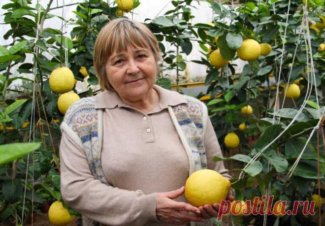 Как вырастить лимоны в домашних условиях