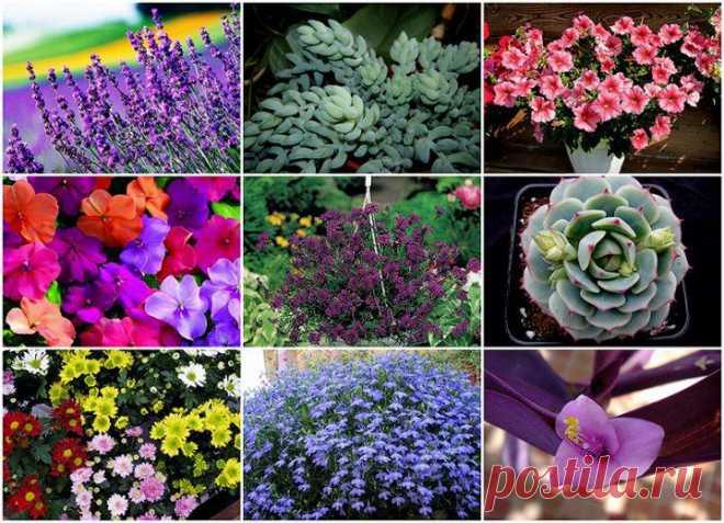 Растения для выращивания в подвесных горшках   ОГОРОД БЕЗ ХЛОПОТ