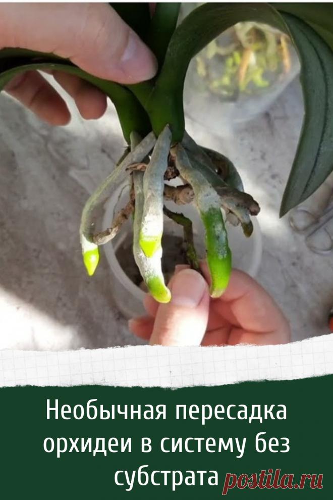 Необычная пересадка орхидеи в систему без субстрата