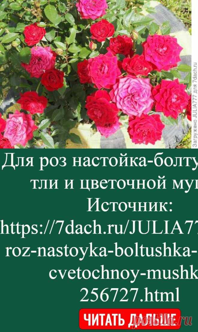Для роз настойка-болтушка от тли и цветочной мушки   Источник: https://7dach.ru/JULIA777/dlya-roz-nastoyka-boltushka-ot-tli-i-cvetochnoy-mushki-256727.html