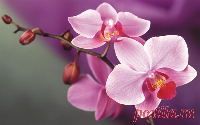 Дрожжи — уникальное удобрение для орхидей | Цветы в квартире и на даче – от Радзевской Виктории | Яндекс Дзен