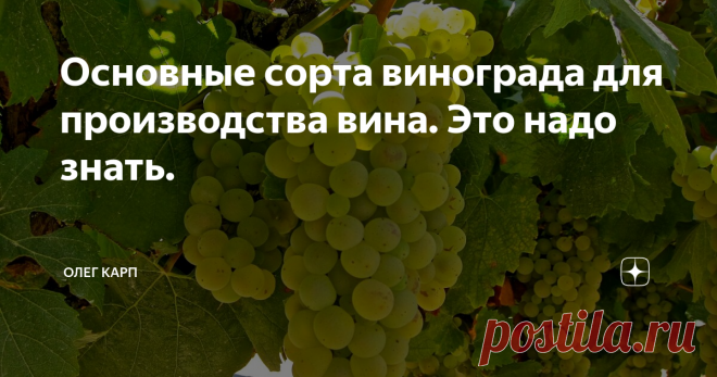 Основные сорта винограда для производства вина. Это надо знать. Белый виноград Шардоне Шардоне считается самым известным сортом винограда, и тем не менее, не самым распространенным. Он составляет всего 1% от всего винограда, выращиваемого в мире. Это устойчивый, сильный сорт. Он используется в Бургундии и в Шампани для производства долгоживущих белых вин. Вкус вина из Шардоне нежный фруктовый, порой с ванильным оттенком дубовой бочки. Совиньон Блан