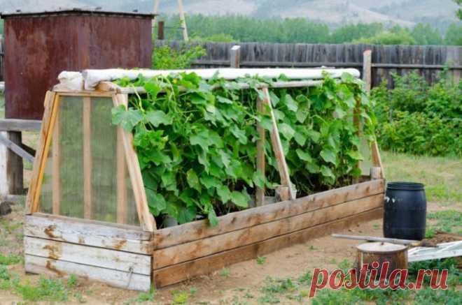 Как сделать парник своими руками   Парник, установленный на приусадебном участке, позволяет получить ранний урожай овощей, ягод, зелени. Домашняя теплица может функционировать в летний период или обеспечивать семью витаминами круглый…