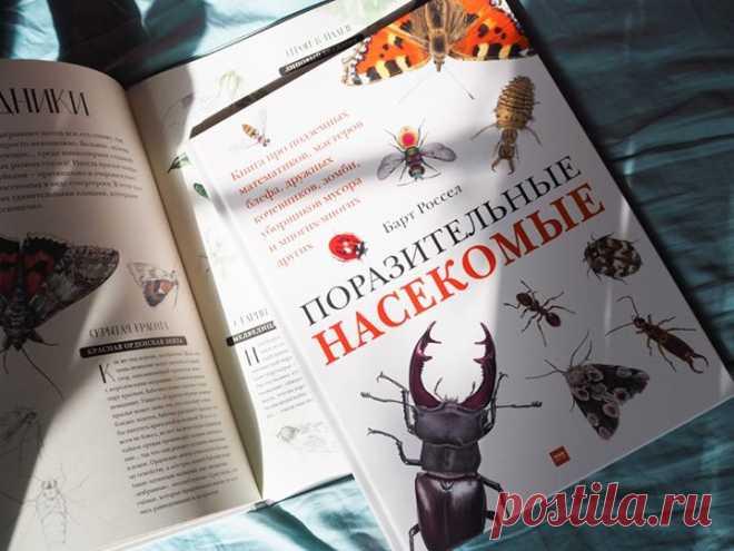 🐞 Друзья, ваши дети интересуются насекомыми? Если да, то наша новая энциклопедия точно им понравится. В ней они найдут много реалистичных иллюстраций и любопытных фактов. Публикуем несколько из них. Вес насекомых Научное название имеют почти 1,5 миллиона видов животных нашей планеты, из них чуть меньше миллиона — это насекомые. Две трети всех известных живых существ! Хотя вполне может оказаться, что настоящее количество видов насекомых в пять, а то и в десять раз больше. Или сравним, к…