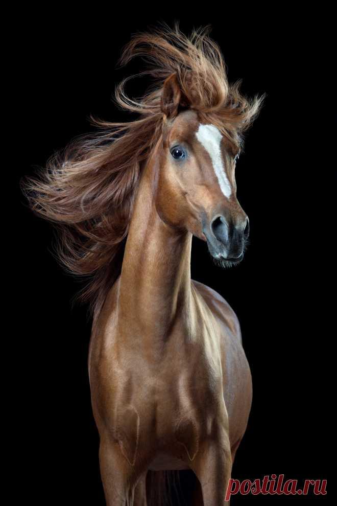 Необычные фотографии лошадей работы Вибке Хаас — Фотошедевры