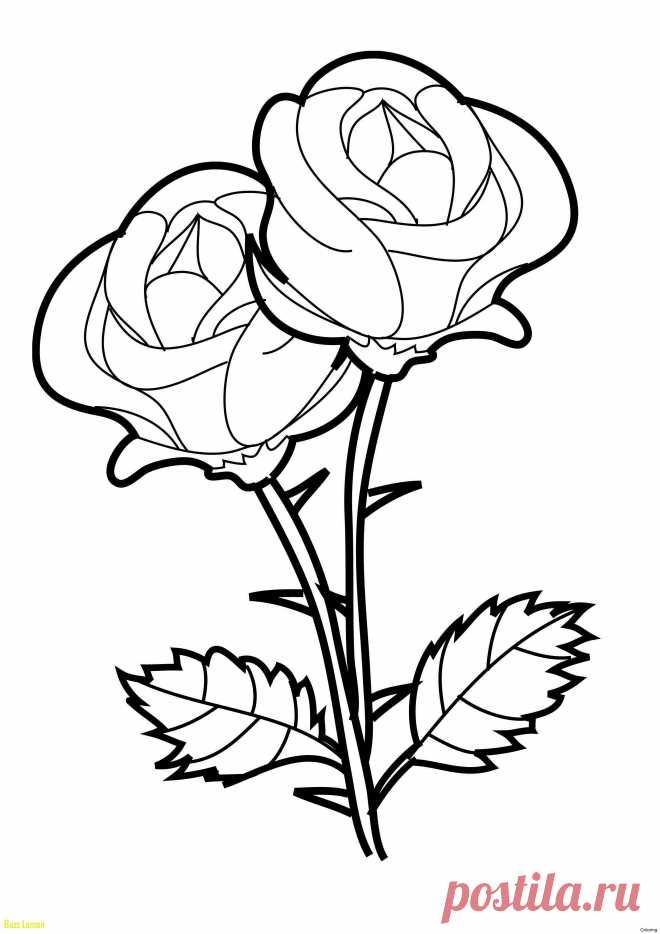 Картинки на формат а4 розы