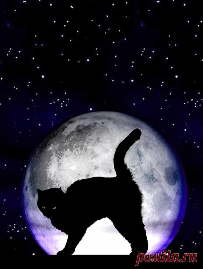 кошки под луной картинки малом море