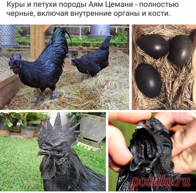 Фермер нашел странные яйца черного цвета – посмотрите, что вылупилось из них... - Страница 6 из 6 - События