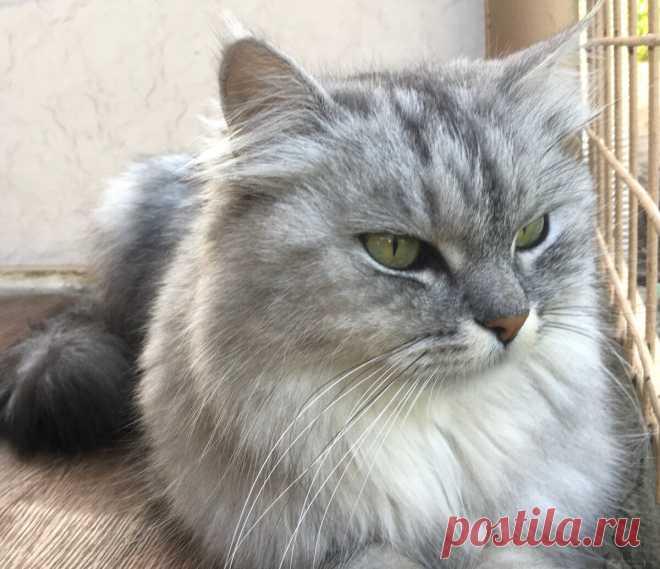 Сколько раз в день следует кормить кошку   Мой обожаемый кот   Яндекс Дзен