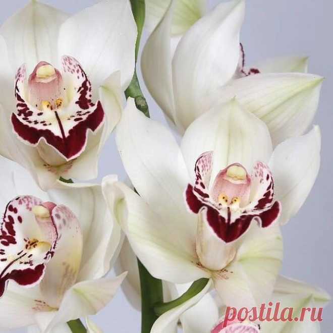 Орхидея - экзотика на подоконнике.