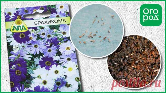 10 цветов, которые сеют на рассаду в апреле | Летники (Огород.ru)