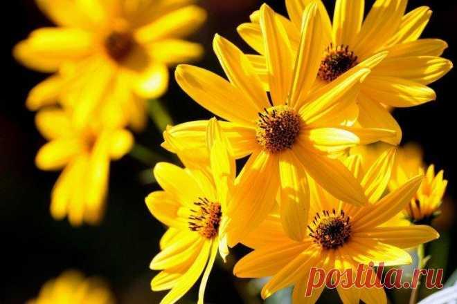 Желтые цветы - названия, фото и описания (каталог) Солнечные желтые цветы мгновенно поднимают настроение одним своим видом. В любую погоду они выглядят ярко и радуют своей красотой. Если это именно то, что тебе нужно – лови наш каталог разных видов с названиями и фото!