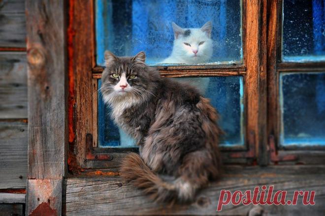 Деревня. Лето. Коты. Душевно. 32 шикарных фото, чтобы отвлечься от суеты | Ламповая кошка | Яндекс Дзен