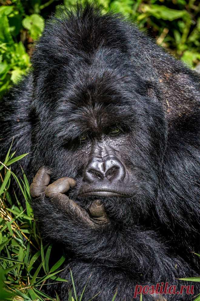 Позитивная галерея: 40 фото сконкурса насамый смешной снимок дикой природы | Канобу