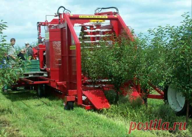 Однорядный прицепной комбайн машина для сбора вишни FELIX/Z купить в Беларуси, цены в каталоге