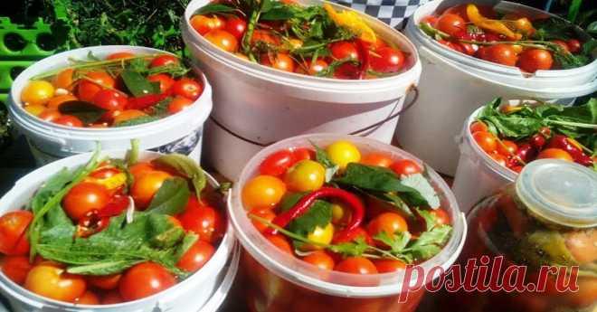 Квашеные помидоры с сахаром с потрясающим привкусом