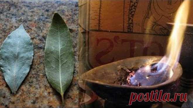 Зачем надо поджигать лавровый лист в вашем доме? Вы будете удивлены!