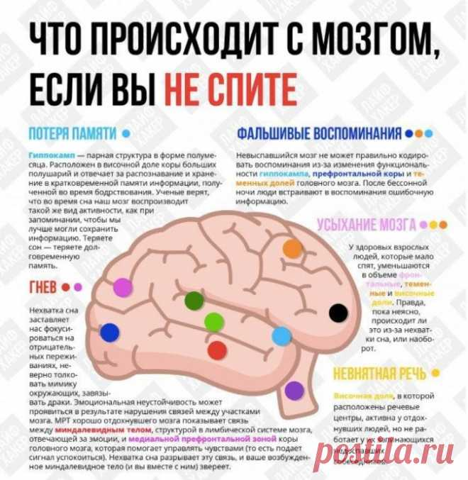 Что происходит с мозгом, если вы не спите
