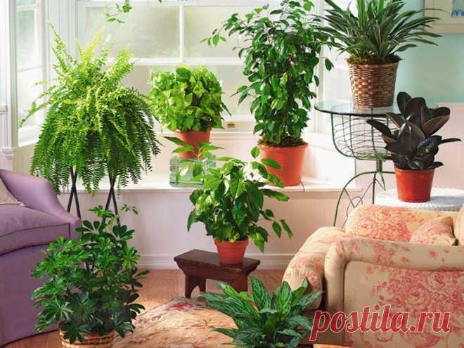 Простой секрет шикарного комнатного цветника Что сделать, чтобы наши любимые цветы на подоконниках круглый год были зелеными, красивыми, буйствовали в цветении?  А секрет роскошного комнатного цветника банально прост: растения нужно хорошо подко…
