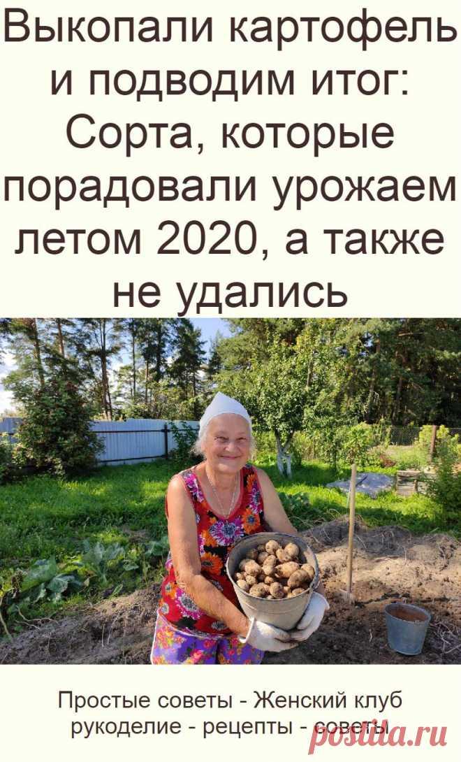 Выкопали картофель и подводим итог: Сорта, которые порадовали урожаем летом 2020, а также не удались