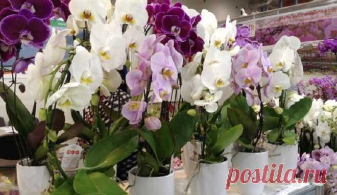 Мои орхидеи — моя гордость! Размножаю их одним секретным способом… - Копилка идей