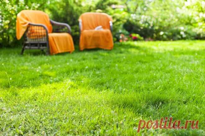 Как сохранить здоровье газона в условиях засухи? Уход летом. Фото — Ботаничка.ru