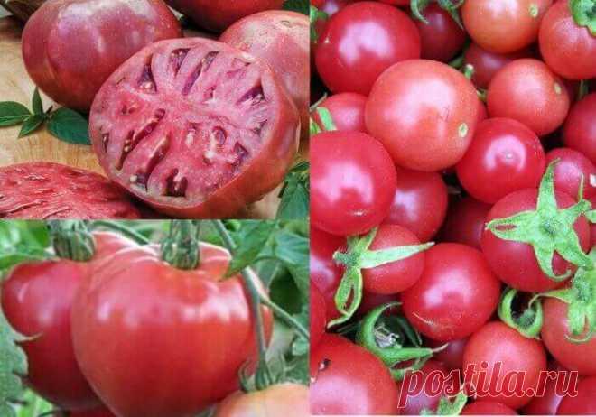 самые урожайные сорта для теплиц