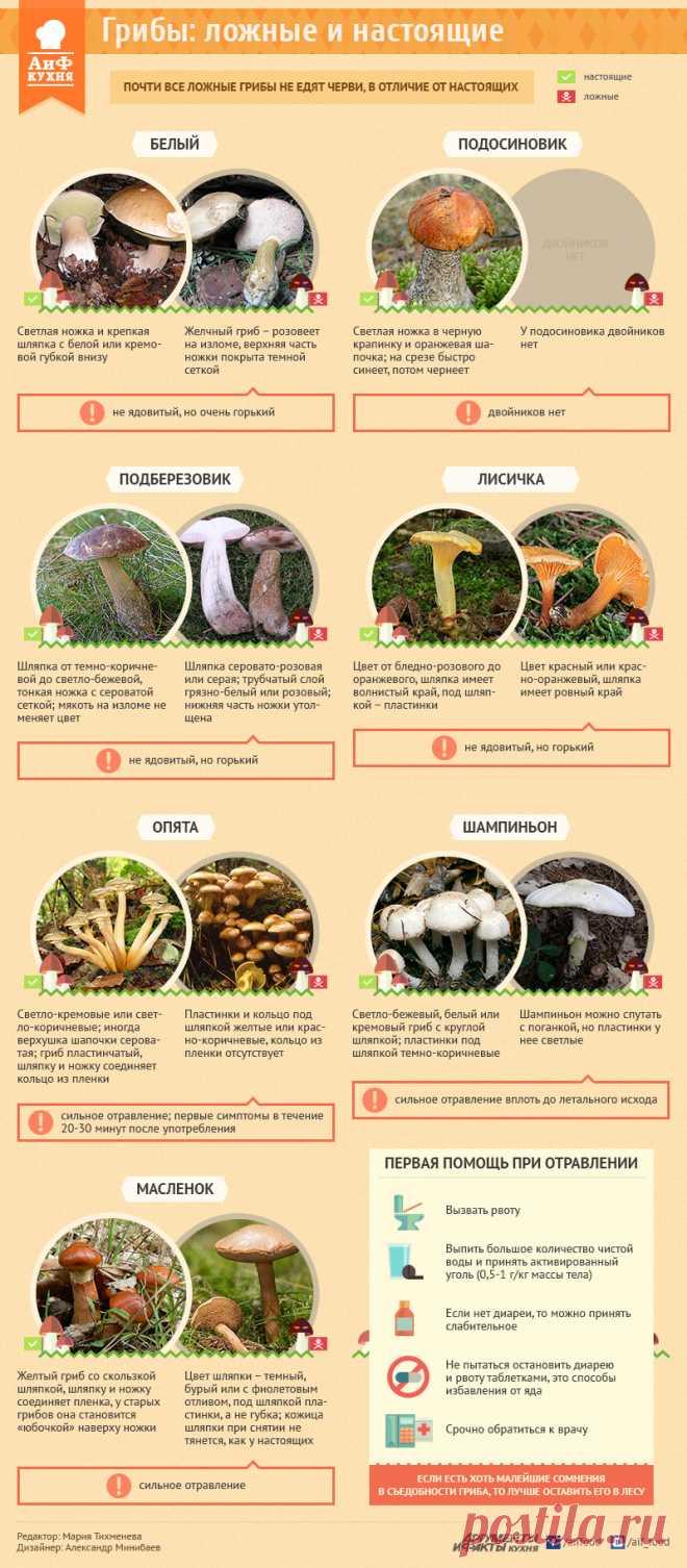 Как отличить съедобный гриб от ядовитого двойника. Инфографика - Продукты и напитки - Кухня - Аргументы и Факты