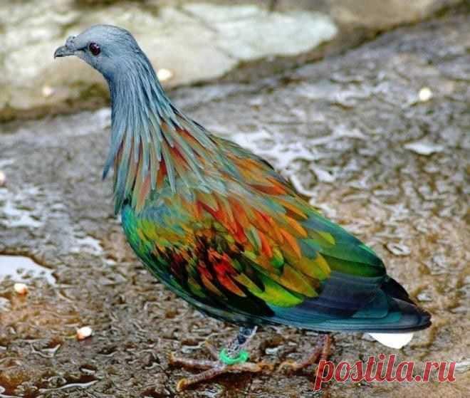 40 восхитительных животных невероятного окраса!