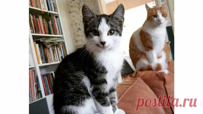 Домашний кот «усыновил» бездомного котенка и привел его в дом - Питомцы Mail.ru