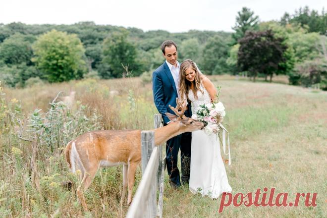 Голодный зверь прервал процесс фотографирования и решил перекусить свадебным букетом невесты