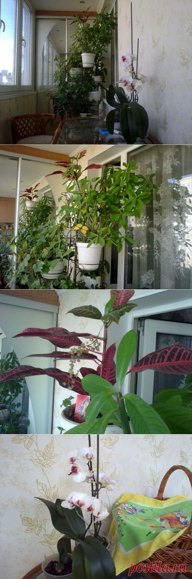 Садочек на утепленной лоджии.   Школа Ремонта