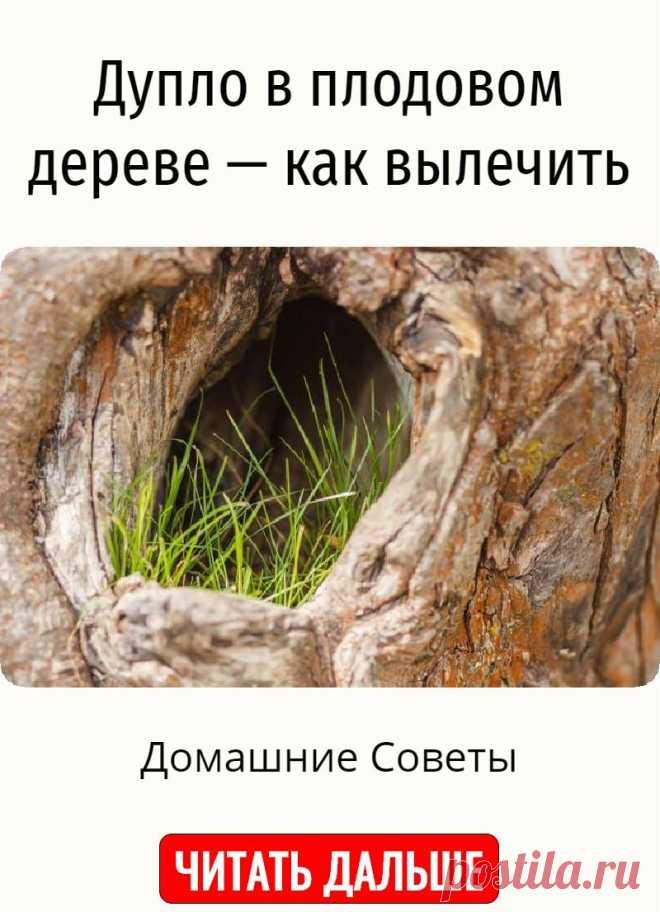 Дупло в плодовом дереве — как вылечить