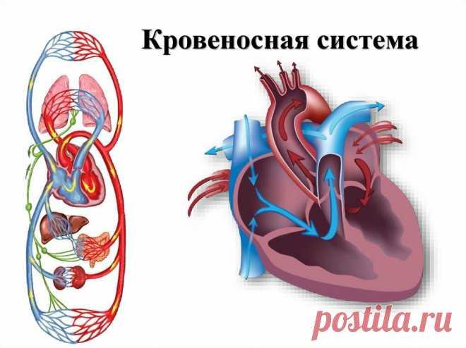 Рассказываю о двух важных упражнениях для здоровья сердечно-сосудистой системы. Тренировка ног для поддержания здоровья. | health and beauty | Яндекс Дзен