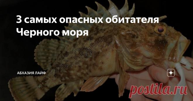 3 самых опасных обитателя Черного моря Самые опасные и ядовитые рыбы