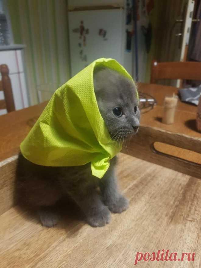 20+ снимков котят, способных растопить сердце даже Волан-де-Морта