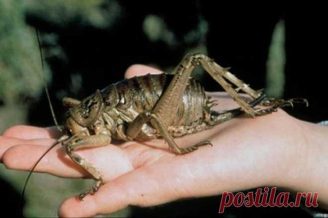Топ-10 насекомых-рекордсменов Более 80 процентов всех живых существ на земле составляют насекомые. В настоящее время науке известно около 900 тысяч различных их видов, а сколько еще неизвестных? Может, миллион, а может и ещё больш...