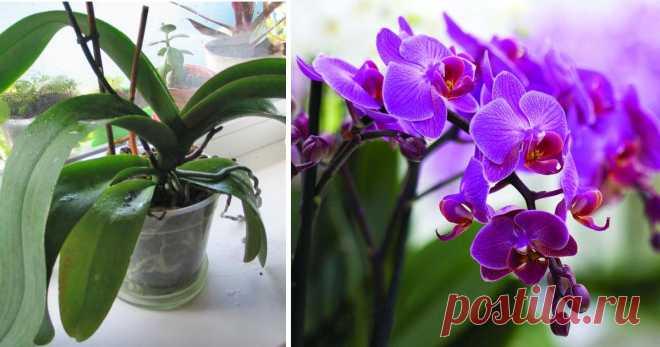 Почему не цветет орхидея: 6 очевидных и неожиданных причинr Фаленопсисынедаром называют «орхидеями для начинающих»: они действительно неприхотливы. Цветоводы охотно обзаводятся экзотическими... Читай дальше на сайте. Жми подробнее ➡