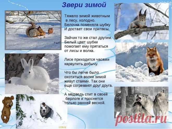 как зимуют дикие животные для детей: 6 тыс изображений найдено в Яндекс.Картинках