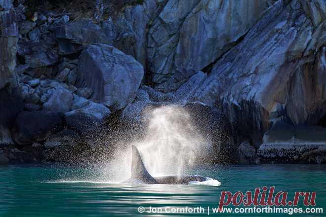 Kenai-Orcas-Blow-4.jpg (900×600)