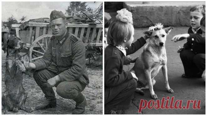 ¿Cómo vivía a los perros en la Unión Soviética? (31 fotos)   el Diablo toma Era mil de historias sobre la vida de la URSS, y como vivía allí a las personas. Mil de comentarios y las disputas de lo que la URSS - el país del sueño. ¿Pero cómo vivía a los hermanos por nuestro menor? Si prestar la atención a las fotografías, se puede ver que en CCCР los perros eran los obreros. Los usaban en las ramas diferentes, y cada perro tenía un asunto. Es ahora con con cada año cada vez menos cerca de perros de trabajo, cada vez más cerca de los favoritos \