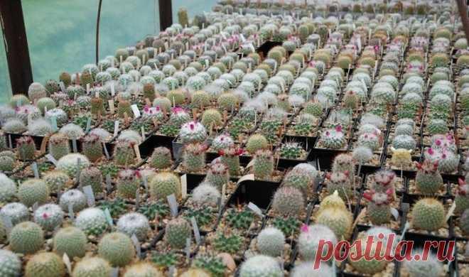 Как покупать кактусы?