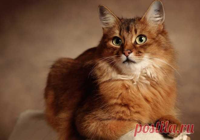 КОШКИН ДОМ. Кошки и мистика