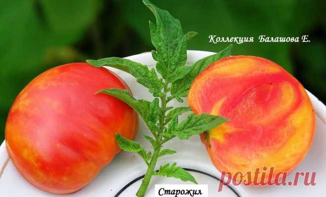 Эти 4 сорта выделяются среди других томатов. Смотрите сами! | Увлеченный садовод и чудо-огород | Яндекс Дзен