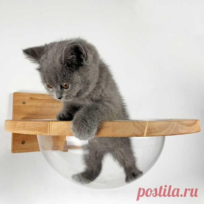 Настенная прозрачная космическая капсула для кошек, настенный дом, дерево для кошек, деревянная рама для скалолазания кошек, кровать для котенка, пружинная доска, мебель для домашних животных | Дом и сад | АлиЭкспресс