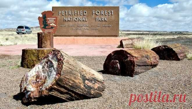 Окаменевший лес Аризоны