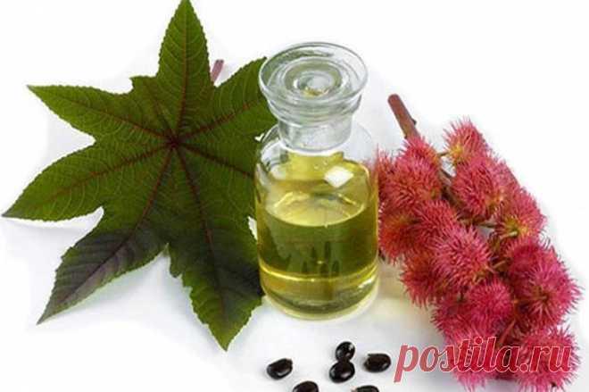 Лечебные растительные масла. Касторовое масло Рецепты народной медицины)